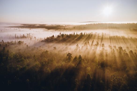Aamu-usva Vaattunkikönkäällä- video